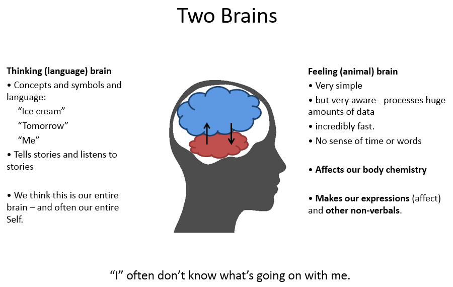 Red brain blue brain how nonverbal conversations run our lives for simplicity im going to call our emotional brain red brain because its red on the diagram below and our analytic brain blue brain ccuart Choice Image